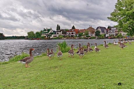 Plaswijk