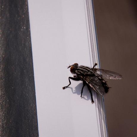 . . . fly 4 . . .