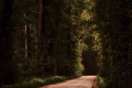 The Magic of Light. - Velhorst, Gelderland. Fijne zondag! - foto door IngeBovens op 02-10-2016 - deze foto bevat: boom, lente, licht, landschap, bos, voorjaar