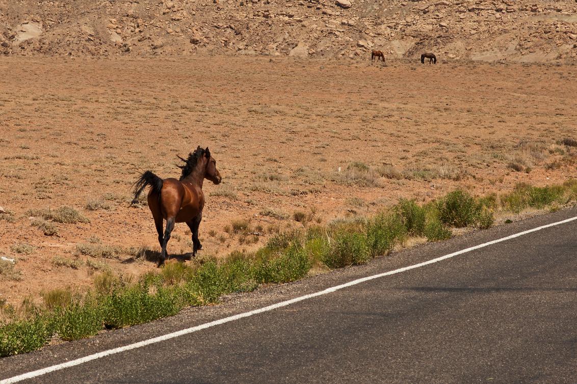 Mustangs 1 - Wat we nu the Southwest noemen kennen we allemaal in onze cowboy-films-herinnering als het Wilde Westen. Cowboys en indianen, John Wayne, the great t - foto door kosmopol op 27-07-2012 - deze foto bevat: paarden, wild, prairie, Wild West, kosmopol