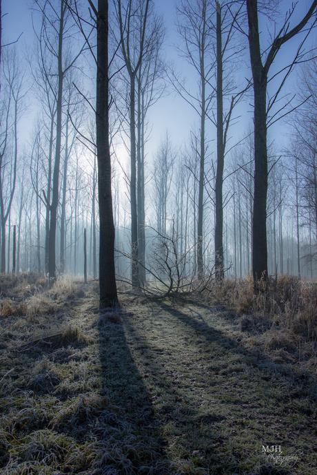 Een koude ochtend in het bos..