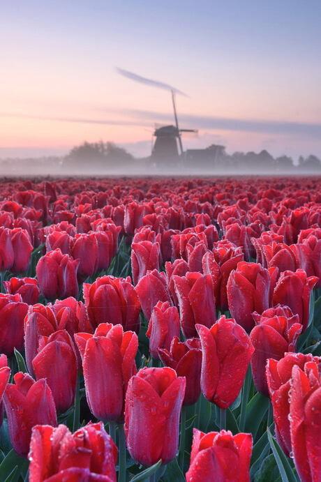 Puur Hollands