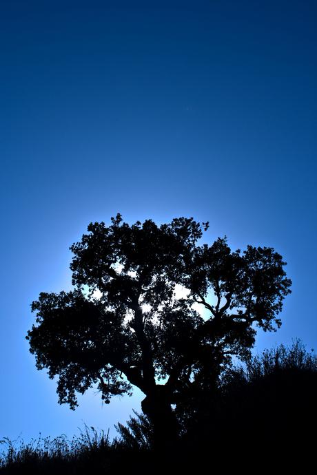 Gewoon een boom :-)