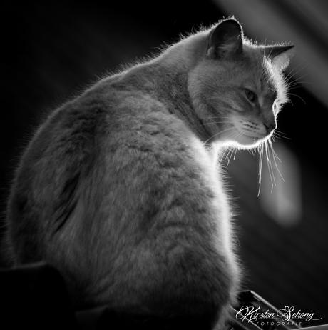 Schaduw kat