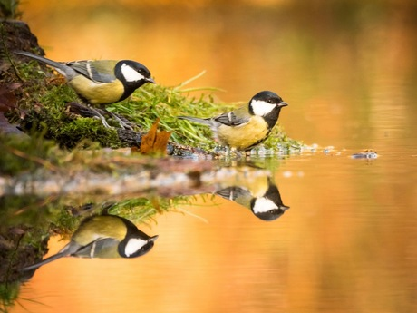 Puur natuur Nederland