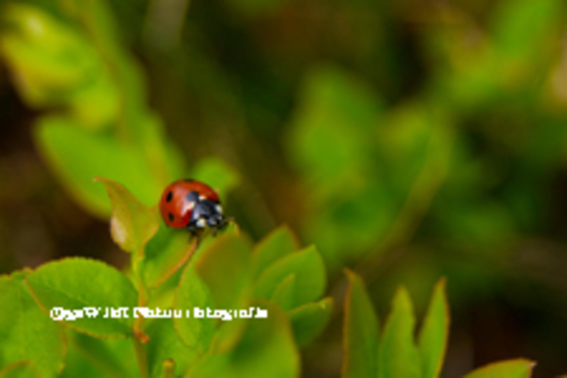 Lieveheersbeestje - Zonder geluk vaart niemand wel, en als je een lieveheersbeestje op de foto wilt zetten, gaat dat zeker op. Na een heleboel vruchteloze pogingen, was  - foto door gewildnatuurfotografie op 29-04-2012 - deze foto bevat: rood, lieveheersbeestje, insect, dier