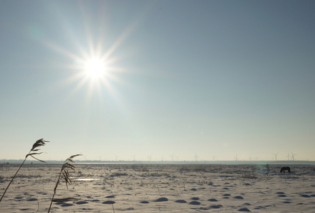 Winters Markiezaatsmeer - Genomen aan het Markiezaatsmeer nabij Bergen op Zoom. In de buurt van bezoekerscentrum de Kraaijenberg - foto door Krulkoos op 29-12-2014 - deze foto bevat: zon, paarden, sneeuw, winter, paard, ijs, tegenlicht, vlakte, kraaijenberg, markiezaatsmeer, Bergen op Zoom, Brabantse wal, Sony A77, maurice weststrate