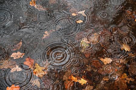 Rainy day - Er valt heel wat regen de laatste paar dagen - foto door marielledevalk op 23-12-2020 - deze foto bevat: macro, water, regen, regendruppel, druppel, herfst, blad, nederland, plas, waterplas, regenkringen