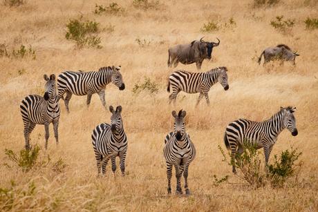 samenleven in de Serengeti