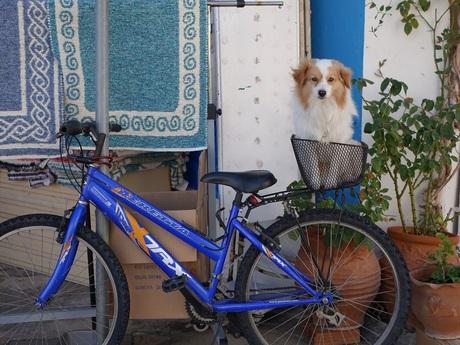 Geduldig hondje op Kefalonia..