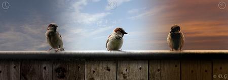 """Once, twice, three times... - Als eerste bedankt voor alle reacties op mijn """"Once, twice, three times..."""" Er zat wat tijd in, dus het is heel leuk om te zien dat jullie 'm kunnen  - foto door daniel44 op 31-05-2009 - deze foto bevat: vogels, mus, dieren, bewerking, daniel44"""