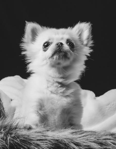 Frenkie - Zwartwit edit - foto door SerenaZoom op 27-02-2021 - deze foto bevat: portret, hond, flits, nikon, lief, zwartwit, studio, photoshop, fotoshoot, flitser, hondenfotografie