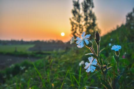 witte bloem bij zonsondergang