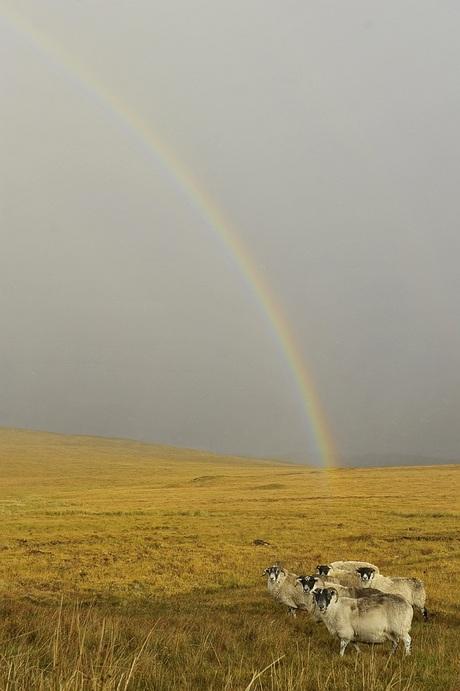 onder de regenboog.