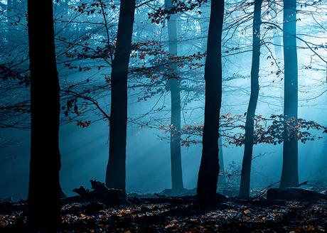 Landscape by morning
