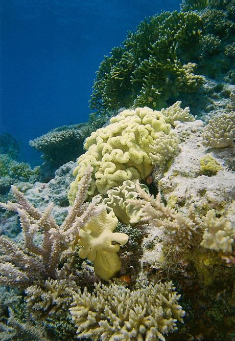 Koraallandschap in Rode Zee