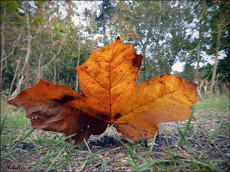 Het is herfst........
