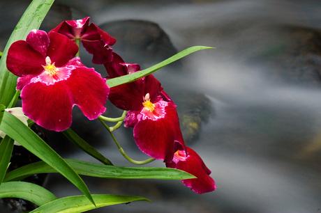 Een bloemetje...