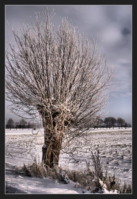 wilg in sneeuwlandschap