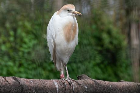 bird-4180