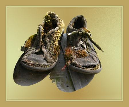 Zijn ze niet mooi!!!!! - Je ziet maar dat je een paar oude schoenen nooit weg moet gooien. Ze ze buiten en dan gaat er van alles op groeien. Iemand vertelde mijn dat je dit  - foto door wimida op 21-06-2008 - deze foto bevat: oud, schoenen, appeltern, begroeid