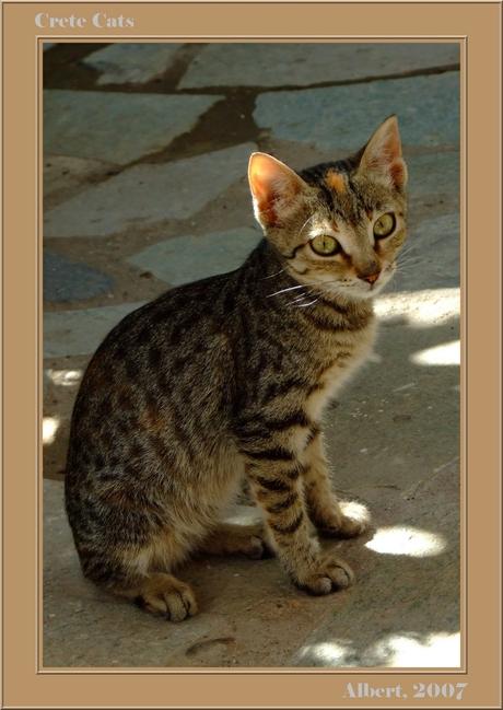 Katten op Kreta 2
