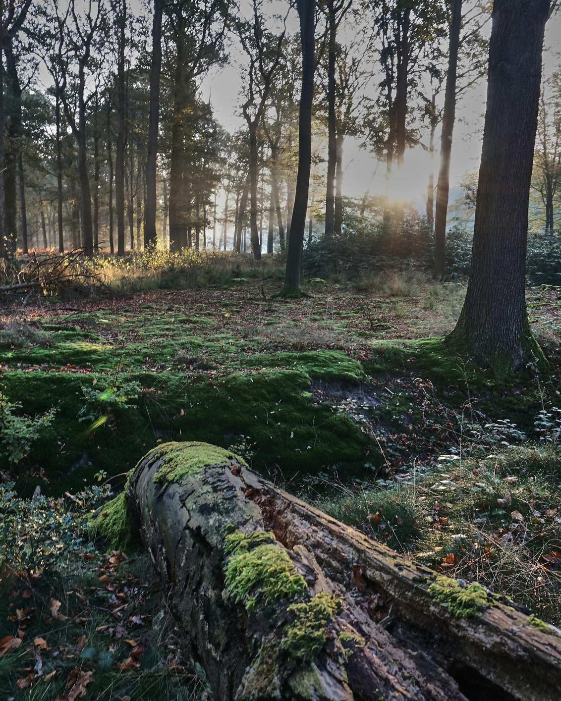 Velhorst morning 2 - - - foto door GerardSchouten op 01-11-2019 - deze foto bevat: zon, boom, natuur, herfst, bos, tegenlicht