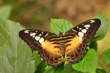 vlinder 2