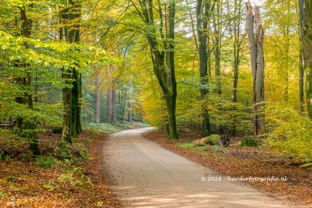 Wandelen in het speulderbos - Het Speulderbos is prachtig om te wandelen, zeker met de herfstkleuren. - foto door deharder op 14-11-2018 - deze foto bevat: groen, boom, geel, licht, herfst, bos, wandelen, speulderbos, deharder