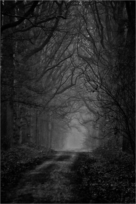 Herbertusbossen in de mist 2