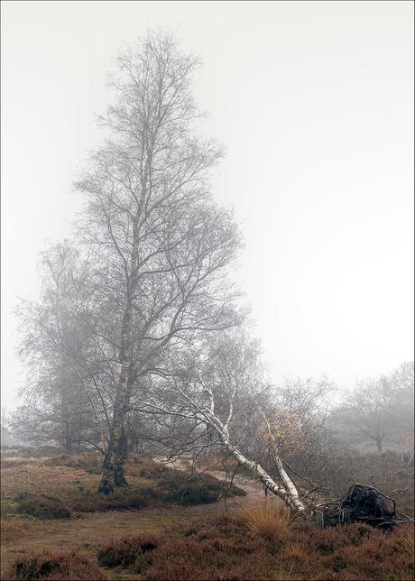 Herfst, vallende blaadjes