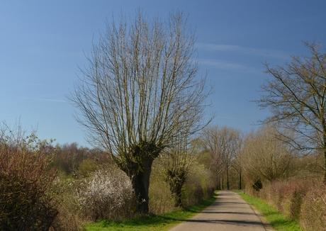 Bij Sambeek
