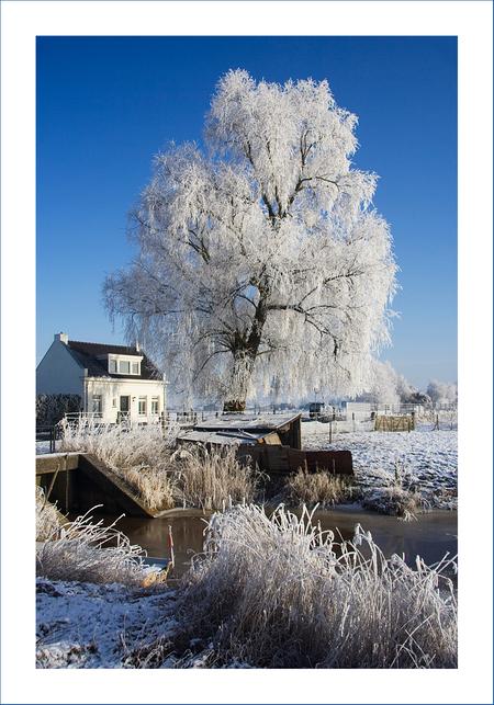 Winter in Terheijden! - Ook deze foto heb ik gisteren gemaakt met polarisatiefilter. Wordt de lucht mooi blauw. - foto door diana2206 op 10-01-2009 - deze foto bevat: lucht, blauwe, licht, sneeuw, winter, terheijden, diana2206, polarisatiefiilter
