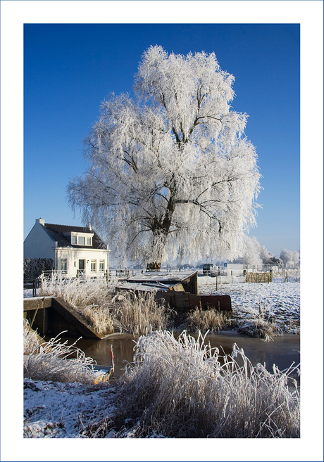 Winter in Terheijden!