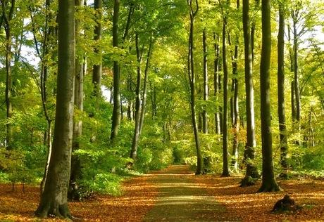 Wandelen door een mooie herfstlaan