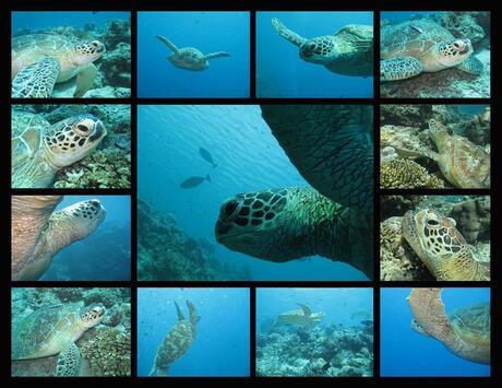 turtle, turtle, turtle.... etc.