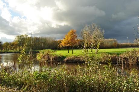 Herfst in Spaarnwoude I
