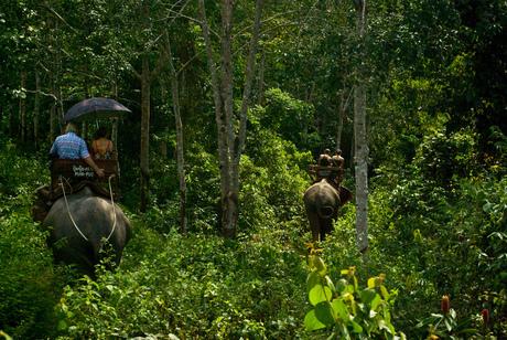 Olifanten in Koh Chang