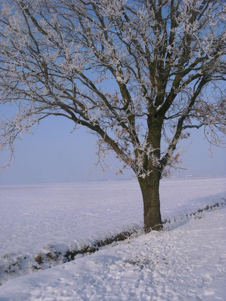 Een boom in de sneeuw.