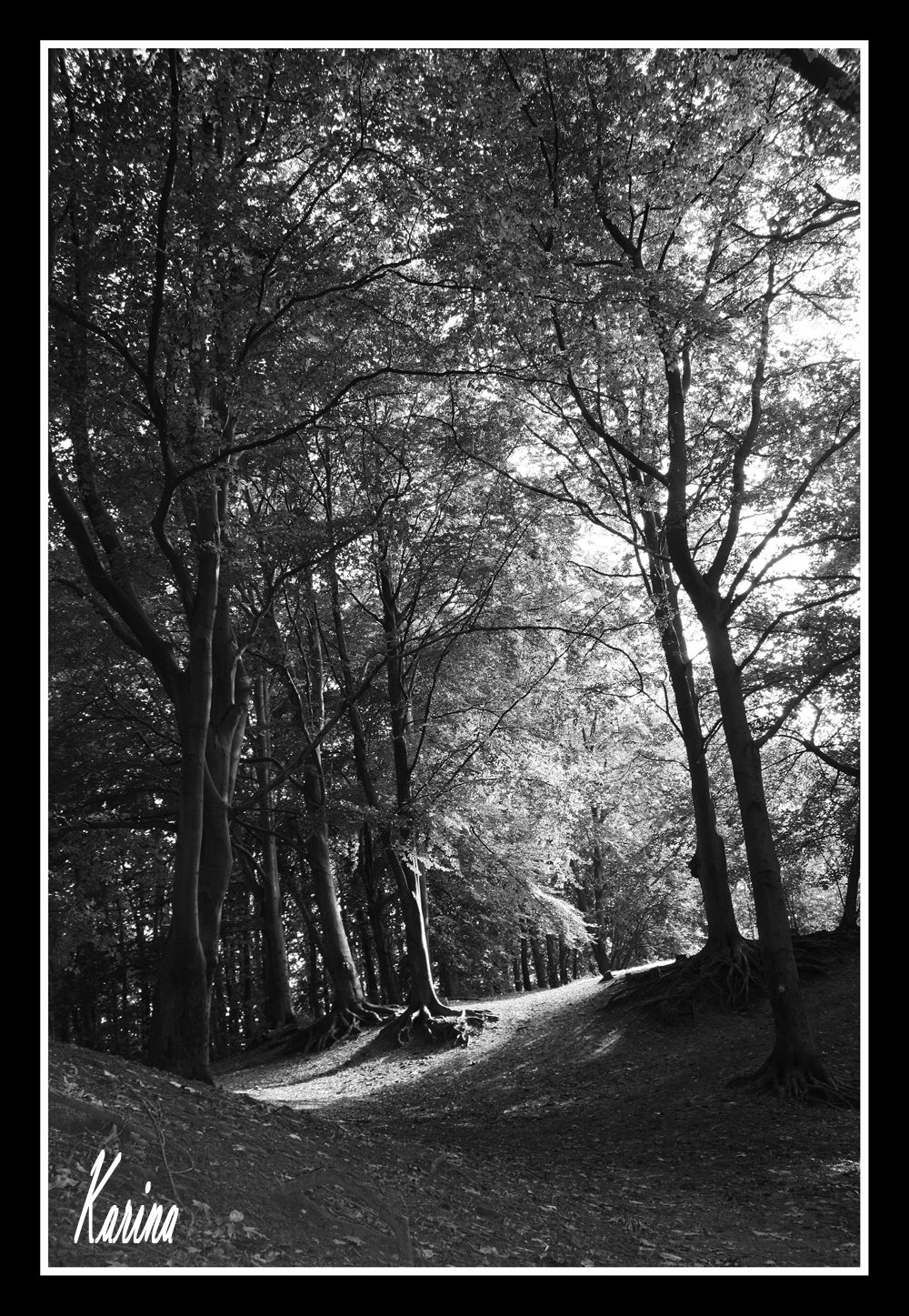 zonlicht - zonlicht - foto door papercup op 26-09-2010 - deze foto bevat: 18