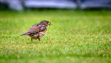 Vogel met worm