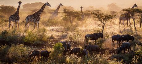 Het Afrika gevoel!