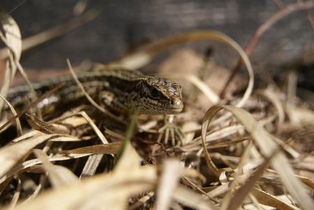 Nederlands wild - Een toevallige ontmoeting in het hooi. Na de foto ook direct weer verdwenen ^^ - foto door MarijeScheening op 21-06-2017 - deze foto bevat: macro, natuur, bruin, herfst