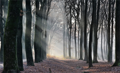 the magic of a forest