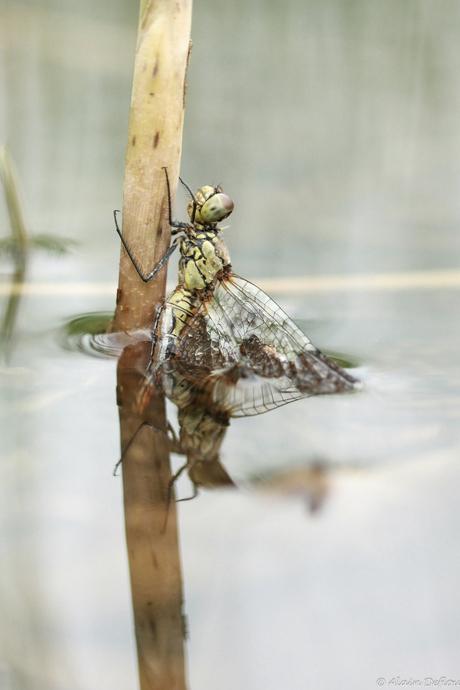 libelle ontpopt