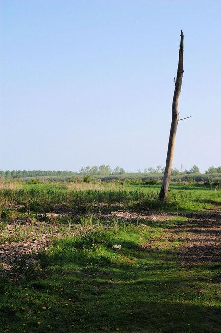 Loneley tree - Een eenzame boomstronk in het bos. - foto door mickie op 11-08-2009 - deze foto bevat: boom, landschap, bos