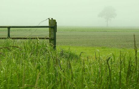 Mist in Zeeland