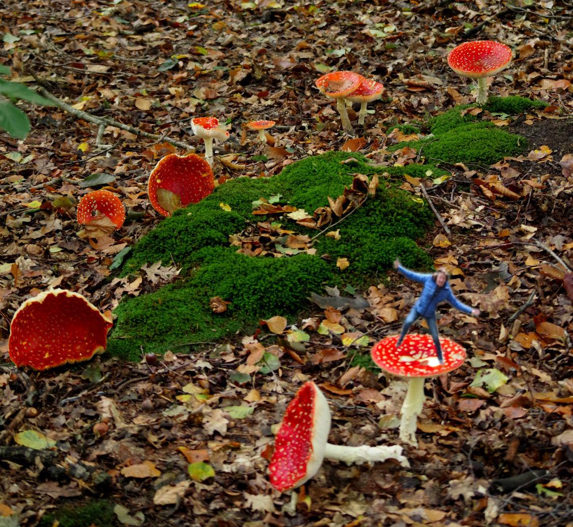 fee in het herfstbos - - - foto door johntomeij op 03-11-2019 - deze foto bevat: paddestoel, herfst, fee