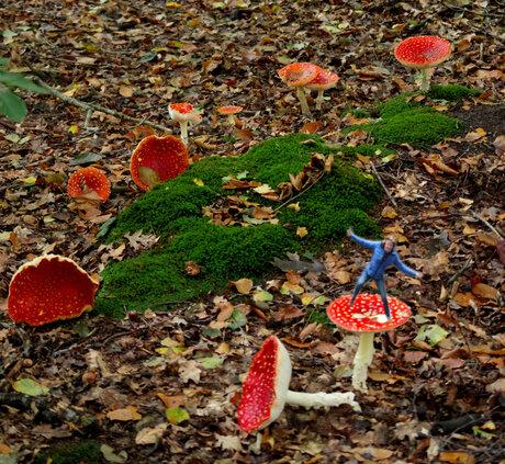 fee in het herfstbos