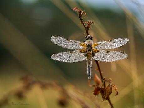 Kristallen vleugels